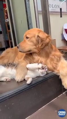 Watch this: Pin by FUNIEA on Happy Pet Lover& . Informations About He just wants to help Pin You can easily use m… Funny Animal Memes, Cute Funny Animals, Funny Animal Pictures, Cute Baby Animals, Funny Dogs, Cute Cats, Cute Animal Photos, Animal Humor, Cute Animal Videos