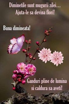 Good Morning Coffee, Dandelion, Thankful, Flowers, Plants, Italia, Quotes, Dandelions, Plant