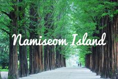 Namiseom Island Seoul Places To Visit, Neon Signs, Island, Block Island, Islands