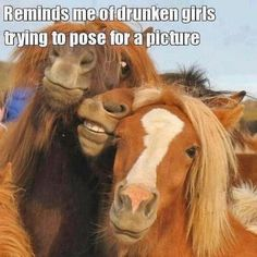 Ha ha ...Repinned with thanks by www.DressageWaikato.co.nz...
