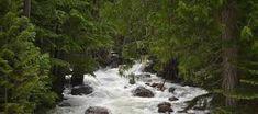 texto informativo con preguntas sobre el dia del agua - Buscar con Google Waterfall, Google, Outdoor, Texts, Outdoors, Waterfalls, Outdoor Games, Rain, Outdoor Living