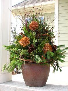Winter – Botanical Blitz – Gardening Professionals