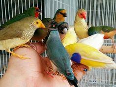Love Birds, Beautiful Birds, Pet Rodents, Australian Birds, Budgies, Parrot, Pond, Wildlife, Colors