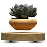 Bonsai Pot Floating Plant Pot for Indoor Bonsai and Home Office Decoration