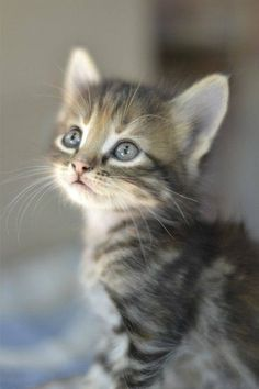 beautiful baby kitten.