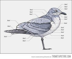 I find the things I learned in biology very helpful…