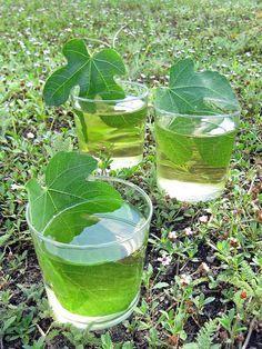 infusion feuilles figuier : plonger 3 feuilles (pour 1 litre) débarrassées des grosses nervures en petits morceaux, ou entières en laissant dépasser les tiges, dans de l'eau bouillante. Boire chaud, ou froid après 1 nuit au frais.