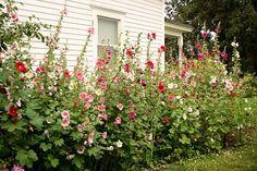 Farmhouse Landscaping Front Yard Ideas 20 Gorgeous Photos (7)