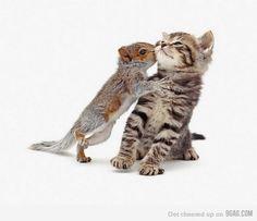 "squirrel= boyfriends  kitten=karen lol   ""LEAVE ME ALONE! lol"" ""I-N-D-E-P-E-N-D-E-N-T"""