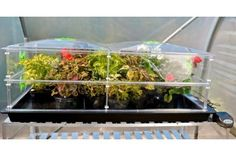 Vitopod Extra Layers from - transform your Vitopod propagator into a mini greenhouse for overwintering exotics and hardening-off young plants. Overwintering, Mini Greenhouse, Garden Structures, Exotic, Layers, Cuttings, Propagation, Plants, Seeds