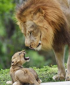 Hahahahaha - that's right little one, you just tell dad what it's all about!
