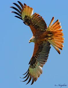 The Glory Hawk - Pixdaus  WOW!