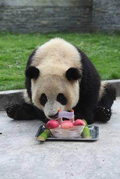 Panda    pandagifts.net