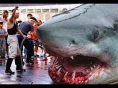 Megalodon Attacks Whale | Giant Megalodon Shark Washed Ashore Australian Beach Real or Fake