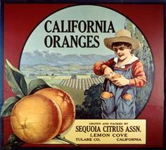 """California is second only to Florida in citrus production. California citrus was """"king"""" in the early 1900s, when ranchers touted the state's lush groves. The state's total citrus production averaged 3.2 million tons from 2003 to 2006. More than 65 percent of that was oranges (navel and Valencia), followed by lemons, grapefruits and tangerines/clementines. California produces 24 percent of the oranges in the United States, most of which are navel orange."""