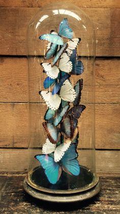 Stolp met vlinders, vlinders onder stolp, vintage stolp insecten - Naturalia, objecten uit de natuur. - De Jachtkamer