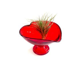 Air Plant in Crystal Heart = Valentine Gift!