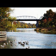 Colorado River bridge at Fisherman's Park in Bastrop, Texas   instagram @ erin_is_awesome