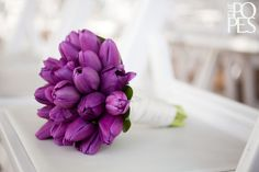 purple tulips as backup for calla lillies