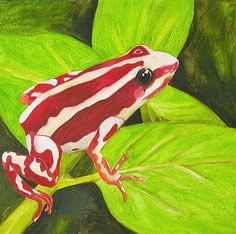 Phantasmal Poison Dart Frog WIP 6 by Gumnut Inspired, via Flickr
