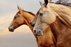 Virginia Range Horses Available to Public for Adoption. Article. 1/17/2014