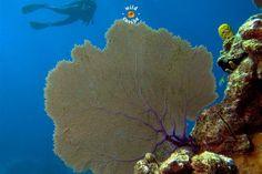Scuba diving,Playa girón, Matanzas, Cuba www.wildcaribe.com