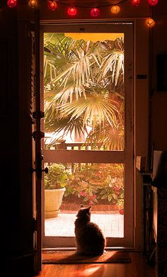 screen door - cats love to look outside.
