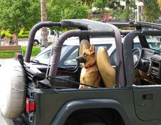 all i want. a german shepherd and a jeep. my life would be complete