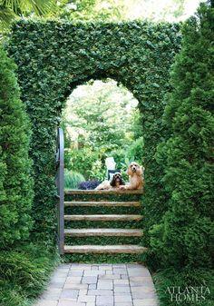 Ivy League Ivy garden pathway via Atlanta Homes and Lifestyles Backyard Pergola, Gazebo, Pergola Ideas, Pergola Kits, Outdoor Ideas, Backyard Ideas, Arbor Ideas, Courtyard Ideas, Pergola Plans