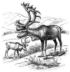 vintage animal clip art, reindeer clip art, black and white illustration, deer elk caribou, printable deer image