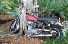 Motorcycle grown into a tree