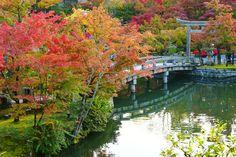 Hope You Enjoy Kyoto