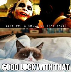 Joker and Grumpy Cat Funny Animal Jokes, Animal Memes, Funny Dogs, Funny Animals, Grumpy Cat Humor, Cat Memes, Grumpy Cats, Haha Funny, Hilarious