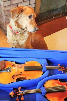 18 No. 3 in A minor Frank Kim and S. A Minor, Violin, 18th
