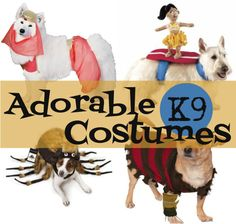 Adorable K9 Halloween Costumes ~ Don't forgot your furry friends this Halloween! | #Ad