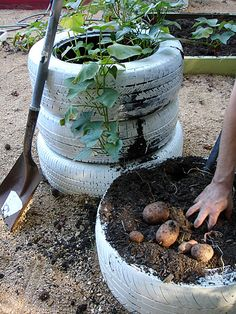 potato tire towers...  potatoes like to be buried a couple times as they grow..  this looks like one easy way to do just that..