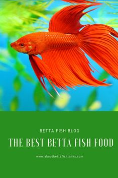 If you want to know what the best betta fish food is to keep your bettas alive and healthy for years, then this is a must read! Fish Tank For Kids, Breeding Betta Fish, Betta Fish Care, Fishing World, Siamese Fighting Fish, Fish Food, Beautiful Fish, Freshwater Aquarium, Marine Life