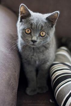 """How we behave toward cats here below determines our status in Heaven."" --Robert A Heinlein"