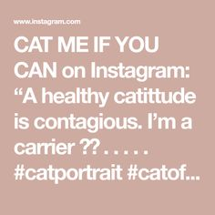 """CAT ME IF YOU CAN on Instagram: """"A healthy catittude is contagious. I'm a carrier 😉😹 . . . . . #catportrait #catoftheday #catcatwalk #catoftheworld #catpicoftheday…"""" Cat Walk, Canning, Cats, Healthy, Instagram, Walkway, Gatos, Cat, Home Canning"""