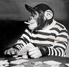chimp smoking and playing cards