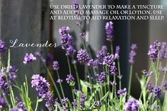 Create a Healing Herb Garden | Six herbs you can grow yourself that when used fresh or dried, have amazing health benefits.