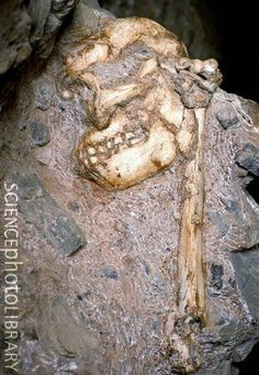 "Australopithecus prometheus - Stw 573 - ""Little Foot"""