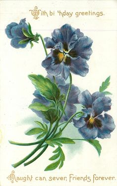 WITH BIRTHDAY GREETINGS NAUGHT CAN SEVER, FRIENDS FOREVER  blue pansies