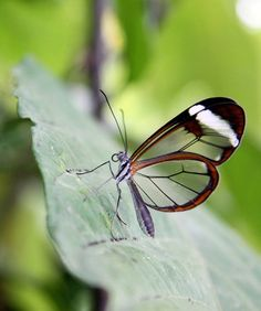 isn't this butterfly AMAZING?