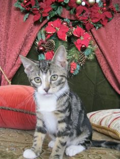 Merry Christmas from His Highness Prince Soren-Foster of The Hinderlinds. HH is the orphaned son of Queen Antonia's late sister. Princess Catlystia was the younger sister of HM the Queen and a hereditary Princess of the Ioa Archipelago (Western Isles). Upon marriage to Prince Bandor of The Hinderlinds (a minor Prince) she became a Princess of the House of the Hinderlinds.  When she and her husband passed their son Prince Soren-Foster came to live with his aunt and uncle, King Valdemar and…