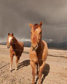 Summer Storm Horse Photograph, Horse in Landscape Art on Etsy, $10.00
