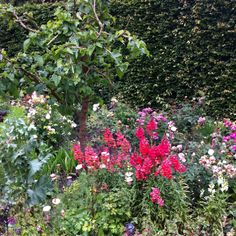 Jane Austen's garden Chawton, England