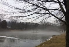 Threesixfive17 - one day at a time: January 11: Mist on the mudpond