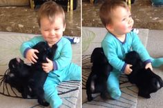 Please Enjoy This Video of a Baby Playing with Pug Puppies