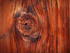 Heres A Photo Quiz Can You Guess What This Is Of Got It Close Up Wood Knot